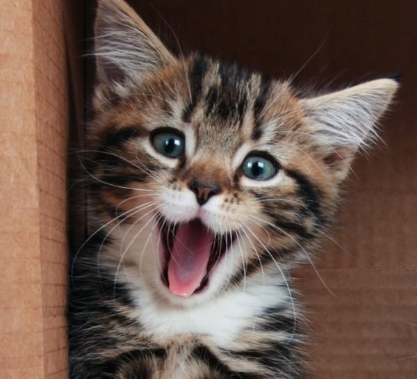 como-poder-hacer-a-un-gato-feliz