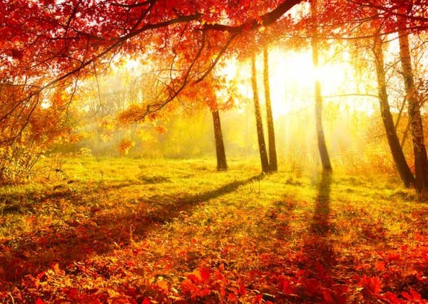 el-otoño