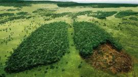 ¿Qué es la contaminación? Clases, Naturaleza y Soluciones