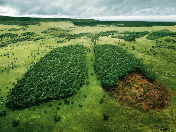 ¿Qué Es La Contaminación? Clases, Naturaleza Y