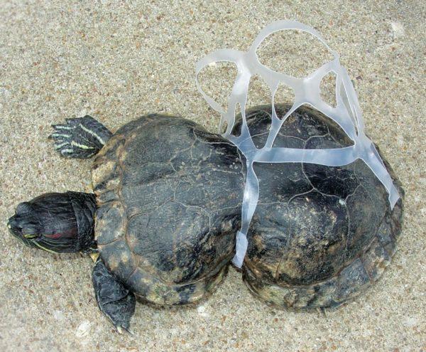 la-contaminacion-tortuga