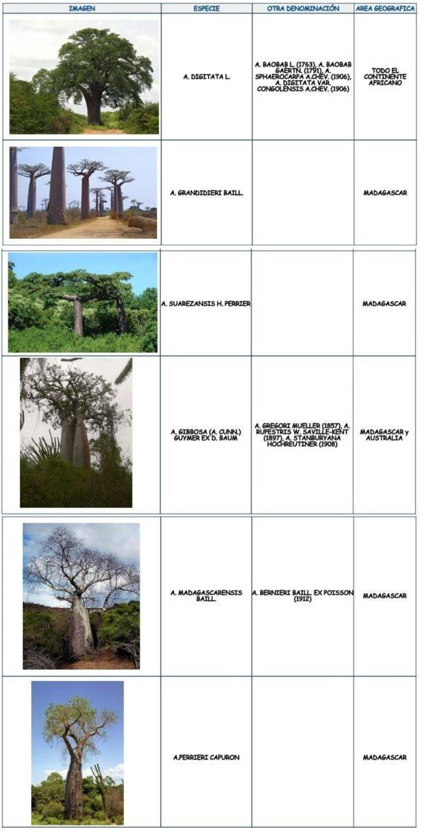 los-arboles-mas-magnificos-del-mundo-baobabs-cuadro-localizacion