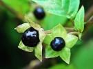 Estas son las 9 plantas más venenosas del planeta ¡Cuidado con ellas!