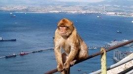 Asesinato de monos en Gibraltar