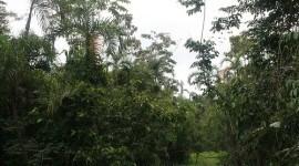 Delincuentes informáticos ayudan a evadir el control de tala