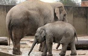El zoo perjudica a los elefantes