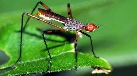 Culpa del calentamiento global los insectos podrían extinguirse en los trópicos