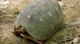Incautan en Brasil a 180 animales salvajes traficados de forma ilegal