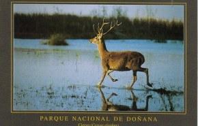 Alta infección de tuberculosis bovina en el Parque Nacional de Doñana