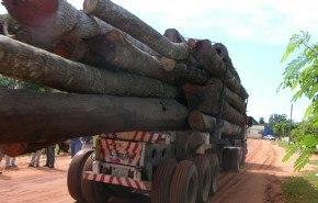 La madera que se utiliza en la Unión Europea sería en gran parte ilegal