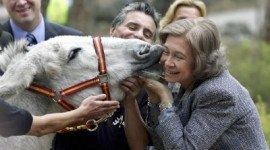 La Reina Sofía bautiza a un burro en peligro de extinción