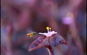 Las abejas han sido declaradas la especie más importante del mundo