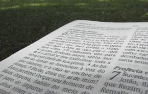 Reflexiones religiosas en torno a la ecología