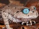 6 nuevas especies encontradas en el Himalaya