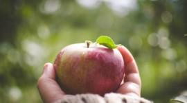 Cómo saber en 2 segundos si la producción de fruta y verdura es orgánica