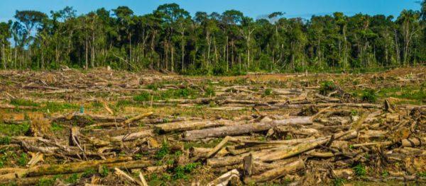 El Medio Ambiente deforestación total