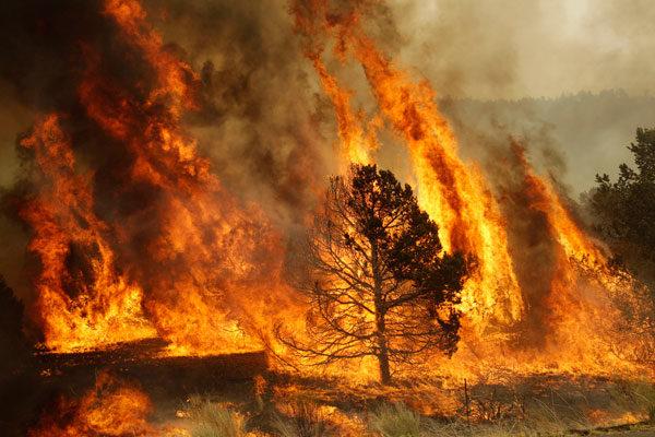 El Medio Ambiente incendios