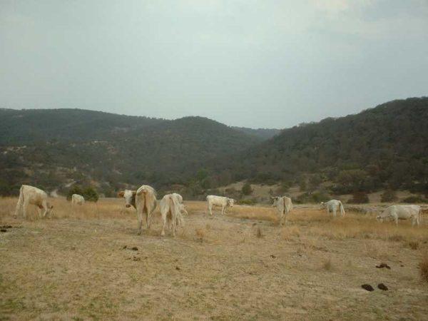 Los Pastos, erosionan el terreno dejándolo yermo