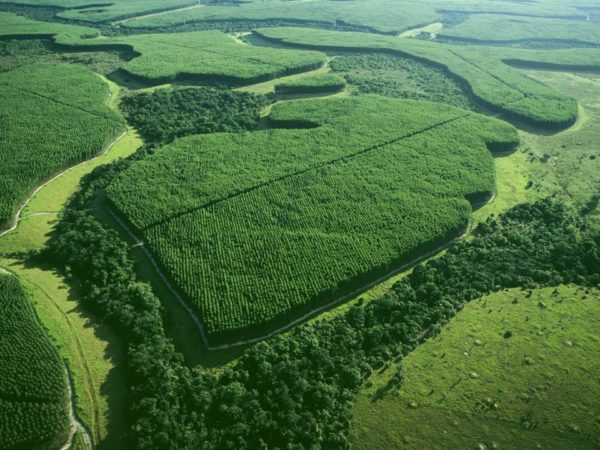 El Medio Ambiente sobreforestación
