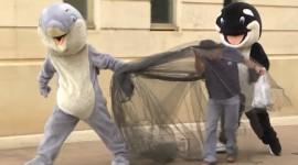 Vídeo de Human World – Una dura crítica a los parques temáticos con animales marinos