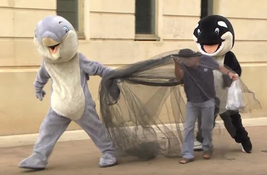 human-world-una-dura-critica-a-los-parques-tematicos-con-animales-marinos