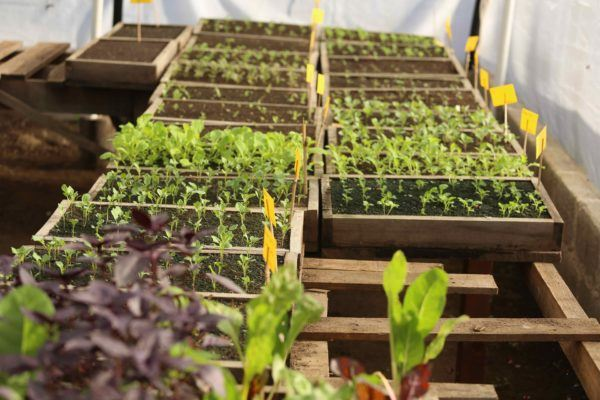 Invernaderos caseros ventajas tipos y c mo construirlos for Plantas para invernadero