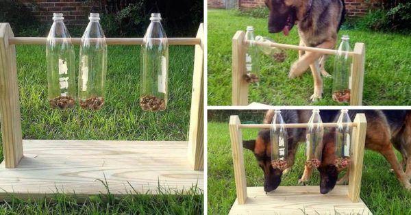 16-ideas-para-reciclar-botellas-de-plastico-juegos-perro