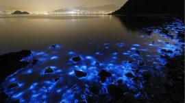 19 animales que brillan en la oscuridad | criaturas bioluminiscentes