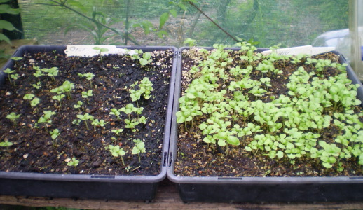 fases-lunares-y-la-agricultura-ecologica