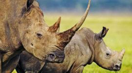 Las fotos de 15 animales que ya se han extinguido