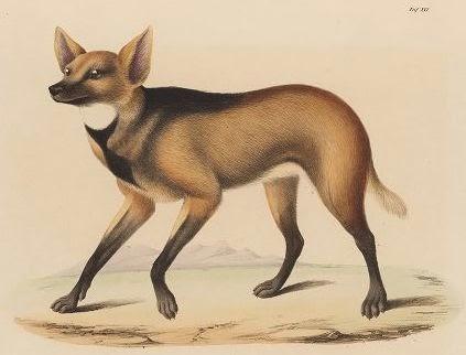 las-fotos-de-10-animales-que-ya-se-han-extinguido-zorro-lobo-malvinas-c