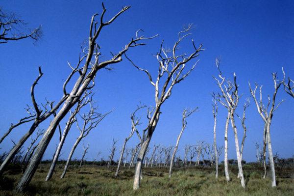 Efecto de Lluvia Ácida en los bosques