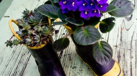 Más de 20 bonitas maneras de decorar tu casa con plantas de interior