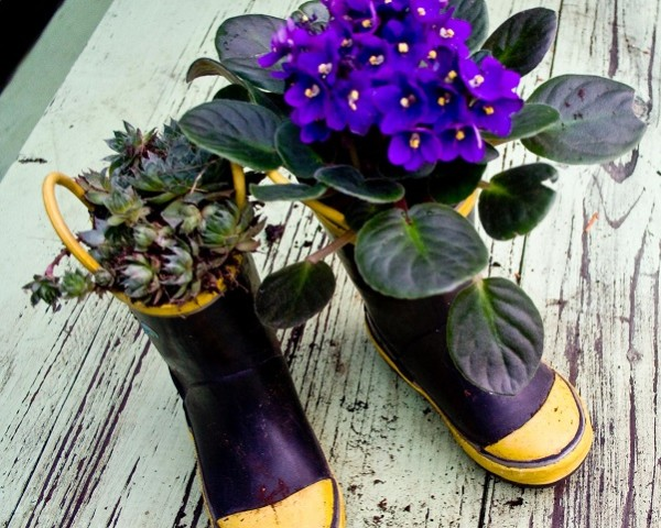 plantas botas