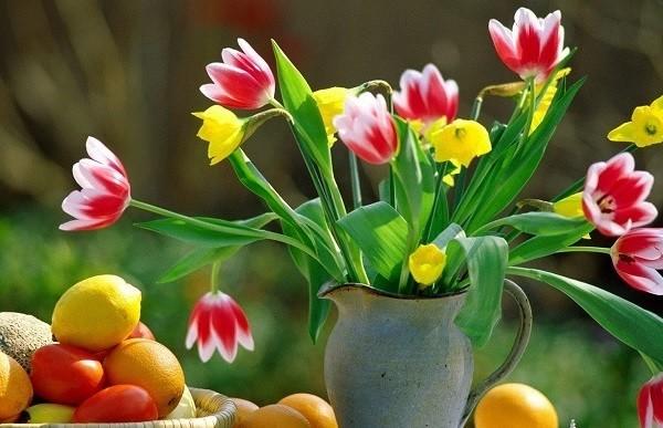 plantas jarron