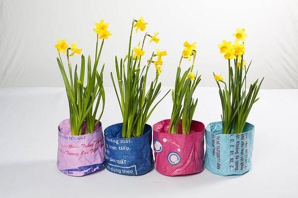 plantas macetas recicladas