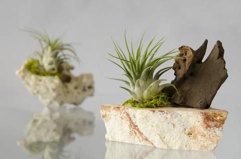 12-bonitas-formas-de-tener-plantas-de-interior-aereas