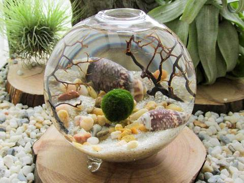 12-bonitas-formas-de-tener-plantas-de-interior-marimo