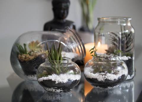 12-bonitas-formas-de-tener-plantas-de-interior-peceras
