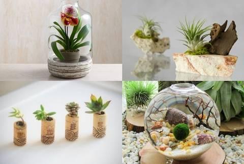 De 20 bonitas maneras de decorar tu casa con plantas de for Tipos de plantas para decorar interiores