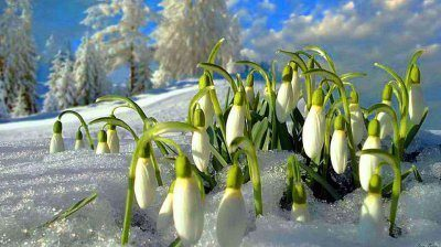 cuales-son-las-flores-de-invierno-galanto
