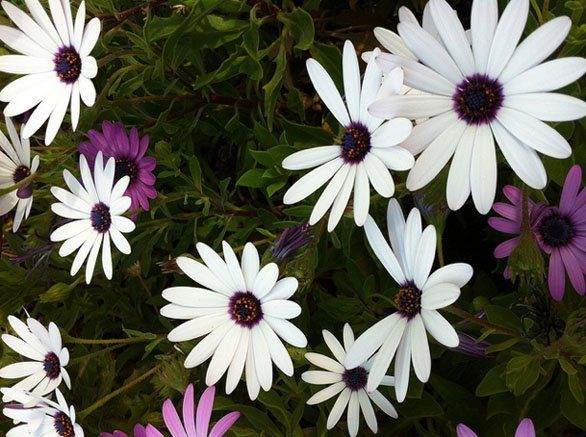 cuales-son-las-flores-de-otoño-alma