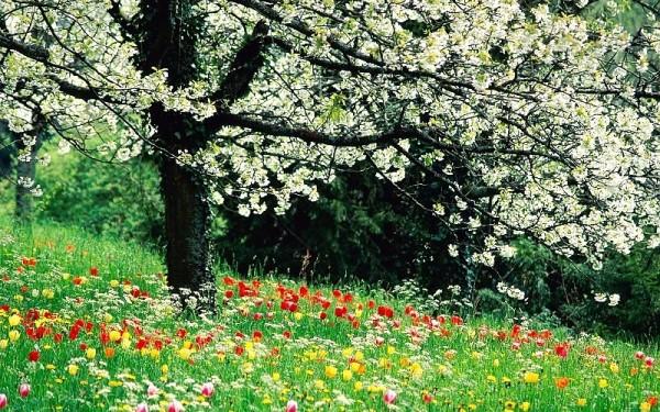 cuales-son-las-flores-de-primavera-flores-en-primavera