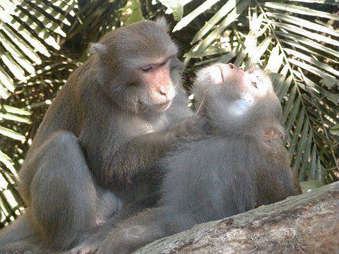 21-animales-que-solo-encontraras-en-un-lugar-del-mundo-macacos
