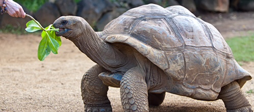 21-animales-que-solo-encontraras-en-un-lugar-del-mundo-tortuga-gigante