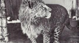 Las fotos y vídeos de los Animales híbridos que existen en el mundo
