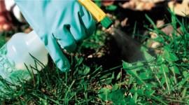6 formas de hacer herbicida casero y natural para eliminar las malas hierbas