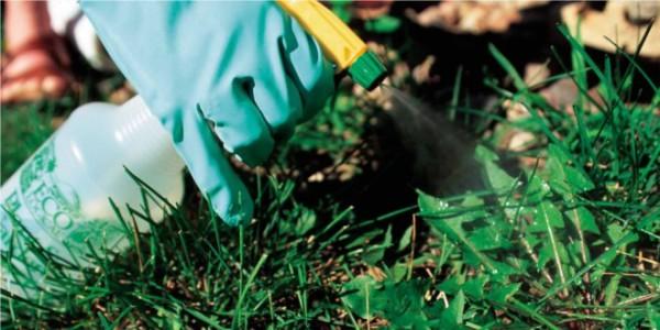 como-acabar-con-las-malas-hierbas