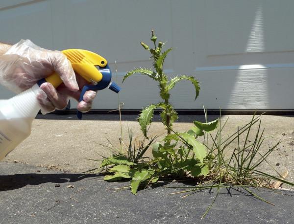 herbicidas-caseros-ideas