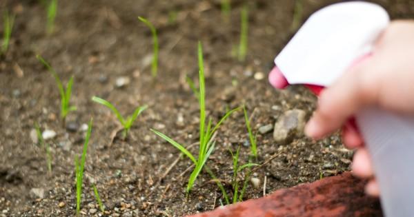 herbicidas-caseros-ideas-con-vinagre